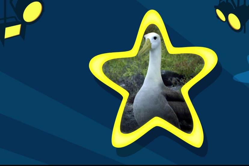ZooMoo大明星