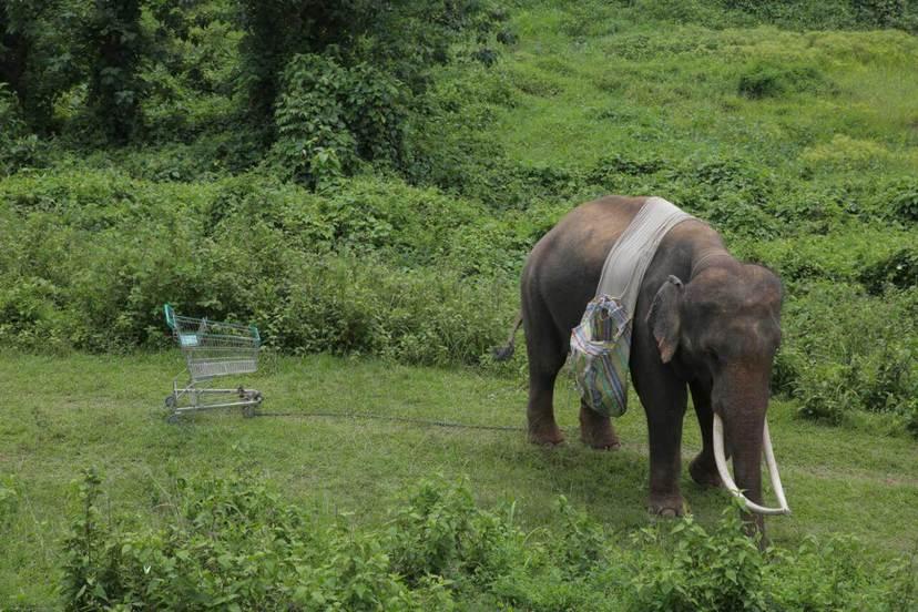 親愛的大笨象