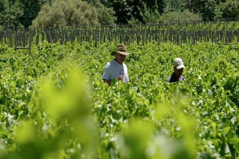 跟著葡萄酒去旅行-新世界之旅 下集