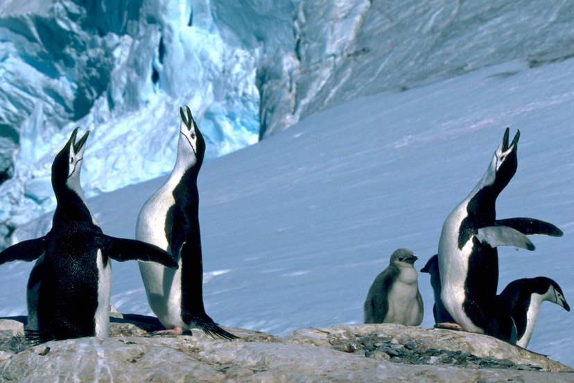 朗恩納菲恩:我與南極企鵝的快樂時光