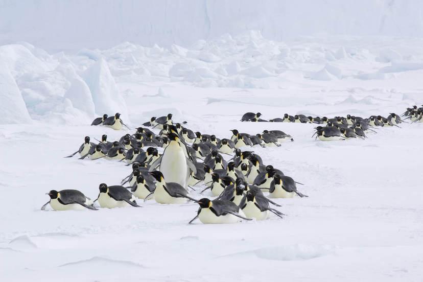 企鵝寶貝2:極地的呼喚