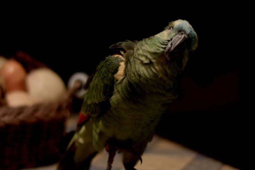 我的媽媽是一隻鸚鵡