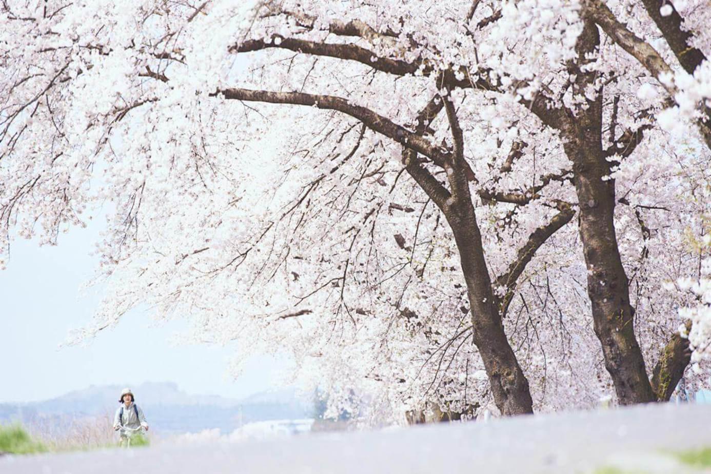 小森食光-冬春篇