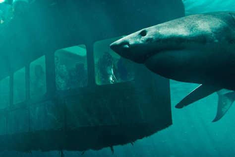 絕鯊47:猛鯊出籠-預告